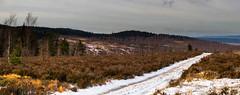 On the Road II (Sroub) Tags: brdymountains canoneos5dmarkiii path road trees forest moor autumn snow sky