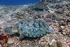 Turtles 12 (Petter Thorden) Tags: diving indonesia gili trawangan underwater turtle