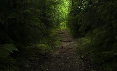 Furubergetskogen (Mats Svendsen) Tags: furuberget hamar hedmark skog forest green woods wood norway fauna pathway path nature woodland