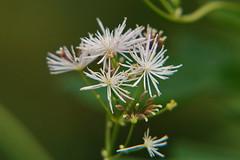 So close (Steenjep) Tags: blomst flower macro makro closeup have garden dof