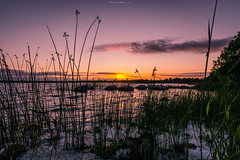 Imperturbable Composure (Ray Moloney Photography) Tags: ifttt 500px nature lake water sky orange reeds foam rocks beautiful sunset grass green ireland clare county trees raymoloneyphoto horizon clouds leaves