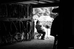 hatstand (Jen MacNeill) Tags: landisvalleymuseum lancaster pa draft horse horses equine percheron farm animals animal blackandwhite bnw man barn harness