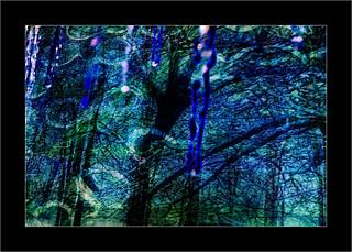 Série Atelier des Lumières : N°7  - La sombre forêt -