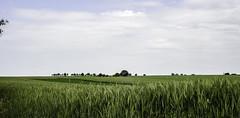 simply landscape (janetfrerichs) Tags: landscape fields cornfield panorama landschaft kornfeld felder nikon germany nikond610 deutschland süddeutschland plants pflanzen