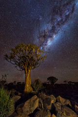 Quiver tree (Alfix61) Tags: nightphotography nightscape milkyway