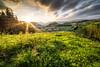 Green grass (Toukensmash) Tags: high mountains landscape land sun sunset setting dark meadow country countryside leoben steiermark styria österreich austria rokinon 14mm pentax k1 view wide angle fotowalk