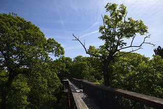 Kew Gardens Treetop Walkway and Rhizotron  (4)