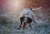 C98 (SitStayCaptureTheNorthEastDogPhotographer) Tags: dog photographer dogphotographer northeastdogphotographer sitstaycapture northeast druridgebay dogsrunning nikond4s rebeccaashworthphotography