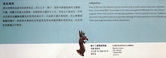 L1070757 (H Sinica) Tags: hongkonghistorymuseum britishmuseum griffin rhodes greece