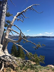 Crater Lake (janetfo747 ~ Dreaming of Africa) Tags: carter lake oregon blue deep cold pure amazing volcano