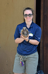 Hannah and the Armadillo (MTSOfan) Tags: lvz lehighvalleyzoo presentation wondersofwildlife education hannah threebandedarmadillo armadillo