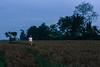 Ubud, Bali, May 2018 (Rait_Tuulas) Tags: ubud bali indonesia evening rice field sunset