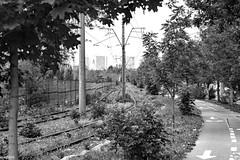 Tramgleis (funktional) (auschmid) Tags: auschmid leicam10 aposummicron75 bucuresti românia bukarest rumänien wege tram gleis grünzeug büsche theperfectx