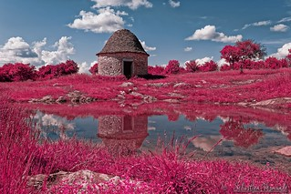 Life in pink - La vie en rose - Infrared
