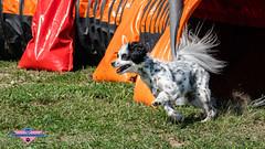_DSC0794 (SeverX9) Tags: sony alpha 6500 70200gf4 dog run