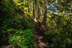 Forest Trail (photobydave@gmail.com) Tags: juandefucamarinetrail forest trail losscreek vancouverisland britishcolumbia canada pacificnorthwest hiking landscape