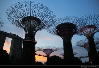 Supertree Grove at Sunset, Gardens by the Bay, Singapore