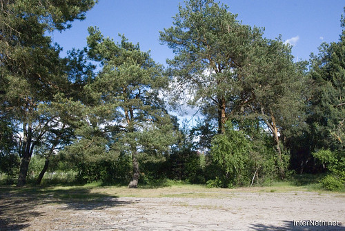 Шацький Національний Природний Парк Озеро Пісочне Сосни InterNetri  Ukraine 355