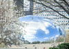 Spring time only. (8-ballmabelleamie) Tags: thebean cloudgate