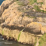 Pigeon Cliff - Great Orme thumbnail