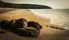 Light Fantastic (Matthew Johnson1) Tags: 2018 beach beautiful coast light llynpeninsula rock sidelight spring wales warm lighting