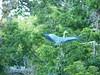101_0344 (Elisabeth patchwork) Tags: bird reiher heron vienna wasserpark floridsdorf