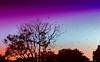 The Gathering (Silke Klimesch) Tags: 7dwf fauna sliderssunday postprocessedtothemax hss silhouettes sunset purple orange corvidae corvus crows krähen vögel silhouetten sonnenuntergang coucherdesoleil asfințit apus apusulsoarelui tramonto atardecer pôrdosol ηλιοβασίλεμα günbatımı заходсолнца corneille cioară cornacchia corneja corvo κόρακασ karga ворона birds oiseaux păsări uccelli pájaro pássaro πουλί kuş птицы пернатые hitchcock thebirds panasoniclumixdmclx100 lumixlx100 lumix leica leicadcvariosummilux nikcollection colorefexpro graduatedfilters