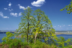 Crown and Volga (МирославСтаменов) Tags: russia zhiguli mogutova river volga tree linden sprouting crown cloudscape sky edge