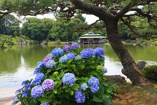 Japanese Garden (Kiyosumi)