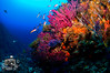 Corals in Ceuta (ShaunMYeo) Tags: ceuta underwaterphotography scubadiving ikelite