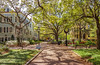 America's Most Beautiful College Campus (Eridony (Instagram: eridony_prime)) Tags: charleston charlestoncounty southcarolina harlestonvillage university publicuniversity campus collegeofcharleston