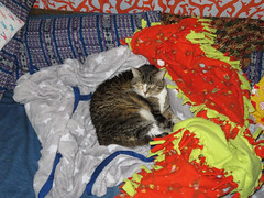 Nadine enjoys some fluffy blankets (benchilada) Tags: nadine enjoys some fluffy blankets cat kitty