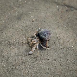 Hermit Crab / Langeoog