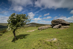 Dartmoor 2018 (Rednaxela13) Tags: dartmoor tor canon wideangle landscape eos 80d 1018mm
