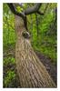 The leaf (bavare51) Tags: baum grün blatt natur rügen