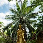 Kuan Yim, Wat Ton Do, Chiang Mai thumbnail