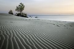 Sulle tracce del vento (nicolamarongiu) Tags: landscapes wind onde sabbia spiaggia mare sea sunset tramonto portopino sardegna italy duna paesaggio colori tracce