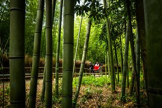 rikisha in the forest (Sagano, Kyoto)