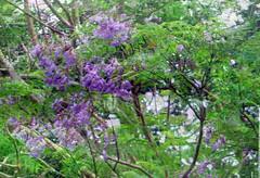 Springtime (soniaadammurray - On & Off) Tags: digitalphotography manipulated experimental collage abstract springtime tree flowers artchallenge exterior nature hss sliderssunday seasons