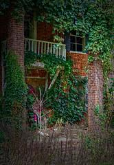 Death of a house (Tigra K) Tags: adolphus kentucky unitedstates us 2017 architecture balcony column graffiti mural nature plant ruin village vine window