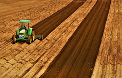 Sandy Soil (Michael T. Morales) Tags: soil tractor rows furrows linear agriculture agart