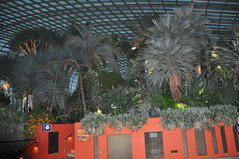 Singapore - Flower Dome/Cloud Forest (V - UK (Thanks for 3,183,853+ views)) Tags: singapore flower domecloud forest
