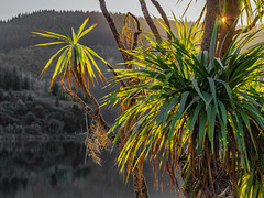 Lake Tutira, Hawkes Bay, NZ (NOL LUV DI 2) Tags: lake tutira napier water nz hawkesbay