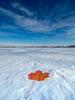 Blue White and Orange (Explore 6.12.18) (MacDonald_Photo) Tags: jamieamacdonald sl33stak zd lightroom oly olympus zuiko eatonrapids michigan getolympus omd omdem1mkii μ43photography μ43 em1mkii omdem1markii winter foliage mapleleaf snow blueskies wideangle ultrawide snowscape 714mm mzuiko714mmf28pro cold