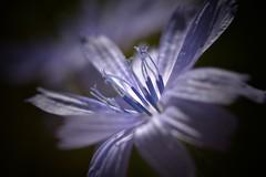 Sólo lo que tú sientas es válido... (elena m.d.) Tags: malva morado nikon d5600 sigma105 flower texturas elena guadalajara