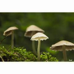 Lighting Up (horstmall) Tags: pilz champignon mushroom hutpilz wald forest forèt sommer summer été moos moss mousse schwäbischealb jurasouabe swabianalps grabenstetten horstmall