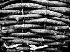 The Basket. (Paul Hillman.) Tags: basket weaving