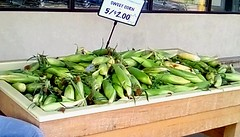 Early sweet corn! Yum!! 365/214 (Maenette1) Tags: sweetcorn cobs display jacksfreshmarket menominee uppermichigan flicker365 allthingsmichigan absolutemichigan project365 projectmichigan