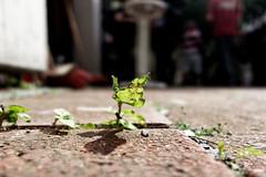 Testfoto mit einer G1 X Mark III (Pascal Volk) Tags: canonpowershotg1xmarkiii testdrive natur nature naturaleza pflanze plant planta wideangle weitwinkel granangular superwideangle superweitwinkel ultrawideangle ultraweitwinkel ww wa sww swa uww uwa dxophotolab letteverein schau2018