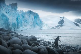Antarctica Dream